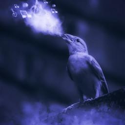 mastershoutout surreal singing bird purple nature hue adjusttool edited madewithpicsart freetoedit