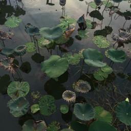 freetoedit natrue green water