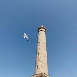 lighthouse bird blue