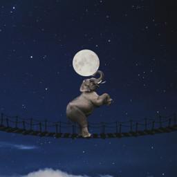 elephant moon night