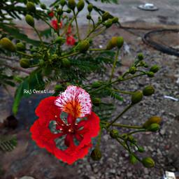 pcbeautifulbirthmarks flower indianbeauty nicepic photography photoshoot editbyme editedwithpicsart shandaar rajcreation