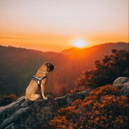 madewithpicsart boxerdog onelove 2021 picsart