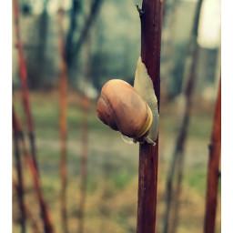 natura wiosna naturephotography fotografia zdjęcie przyrida przyroda photography ślimak snail mothernature