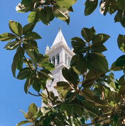 freetoedit berkeley ucberkeley cal campanile tree leaves freeforbusiness
