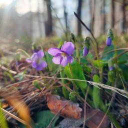 весна цветы freetoedit