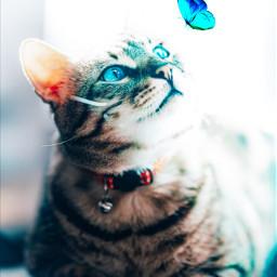 cat glowingeffect freetoedit