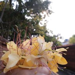 flower crateva neermaathalam kerala punnayurkulam aami fav writer photography nature keraka