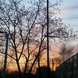 nature sunset trees sky freetoedit pcmothernature