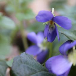nature natureisbeautiful heart summer violet flowers flower pcmothernature mothernature
