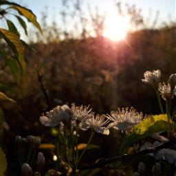 sunrise dewdrops nature