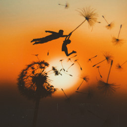 dandelion silhouette flying freetoedit srcfloatingdandelions