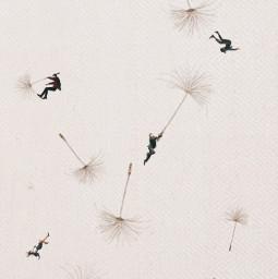 dandelionseeds dandelionsilhouette srcfloatingdandelions floatingdandelions freetoedit