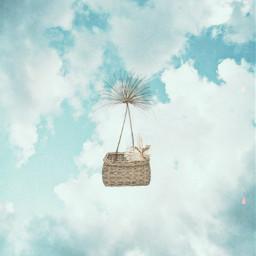 hotairballoons hotairballoon dandelion fairy srcfloatingdandelions floatingdandelions freetoedit
