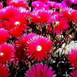 lameravigliadellanatura fioridicampo festadicolori machebello regalosunicos freetoedit