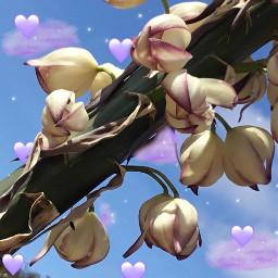 srcpurpleclouds purpleclouds freetoedit