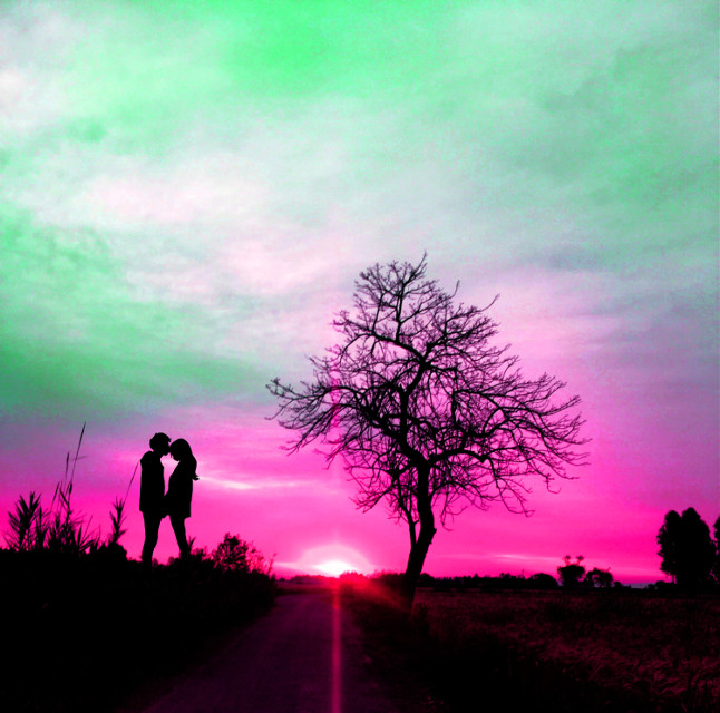 #pink #sky #tree #colorpop #silhouette