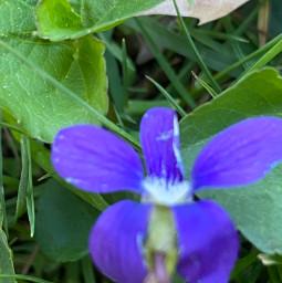 flower purple nature pcmothernature mothernature