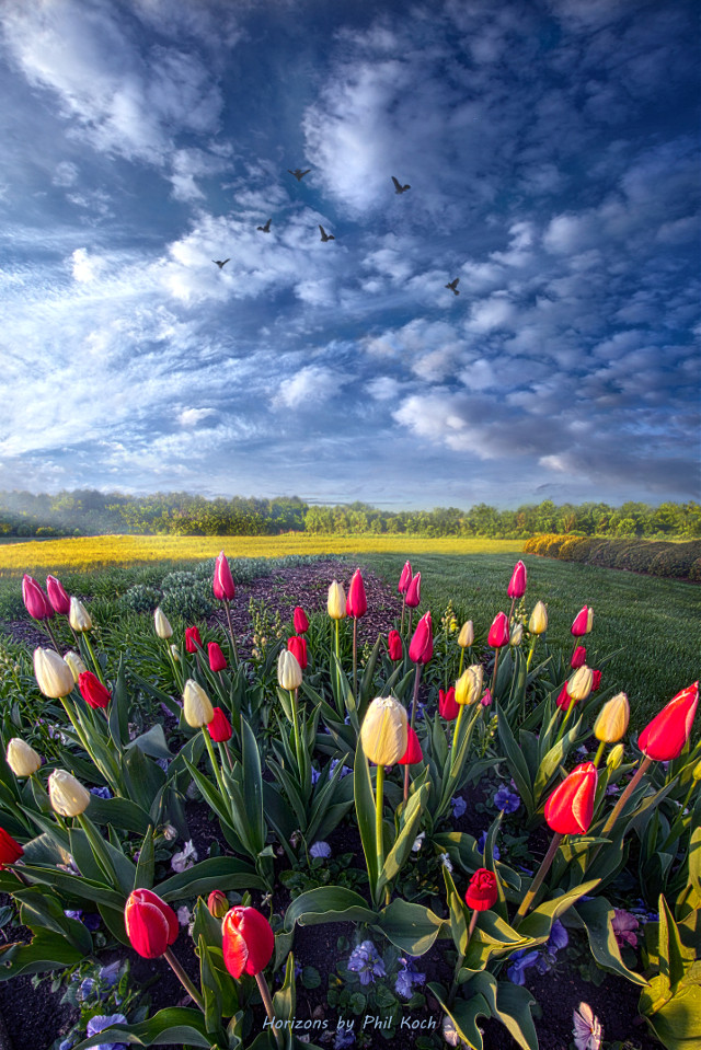 """# Dance of Life """" - Wisconsin Horizons by Phil Koch.  Turning natural landscapes into portraits of nature . #freetoedit #remixit #nature #landscapephotography #beauty #pretty #follow #fanart #peace #happytaeminday #popular #popularpage #tulips #spring #flowers"""