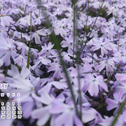 nofilter inmygarden garden flower naturephotography srcmaycalendar2021