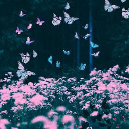 pink wildflowers freetoedit