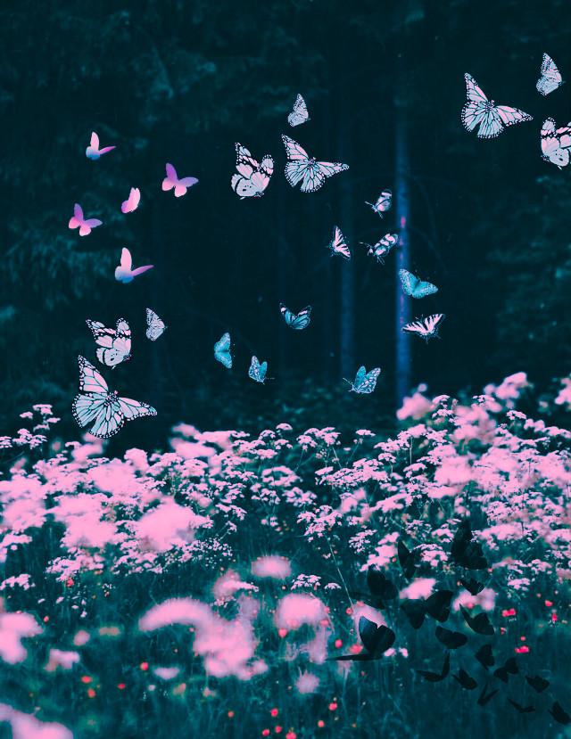 #pink #wildflowers