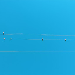 birds sky bluesky pole wires hightensionwires clearsky