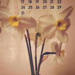 last daffodils calendar srcmaycalendar2021 maycalendar2021