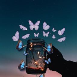 butterfly freetoedit