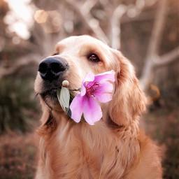 dog aesthetic bokeh lensflare dogaesthetic freetoedit
