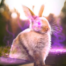rabbit bunny book books mythical magic spring grass green sunlight glow purple morning nature