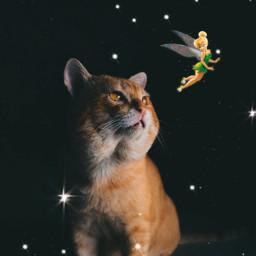 cat cats tinkerbell sparkle sparkles freetoedit