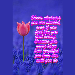 flowers abstract rose rainbow colorful words love quotes quote