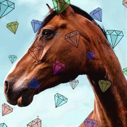 horse equestrian diamonds beautiful srcshinycrystals shinycrystals freetoedit