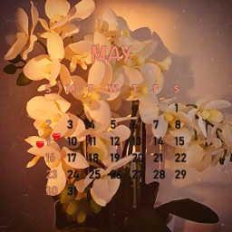 maycalendar calendar2021 monthofmay flowers myphotography sunset sunlight shadows shadow srcmaycalendar2021 maycalendar2021 freetoedit
