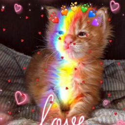 catlover freetoedit