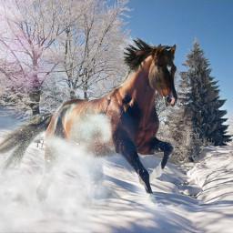 horse pferd freetoedit