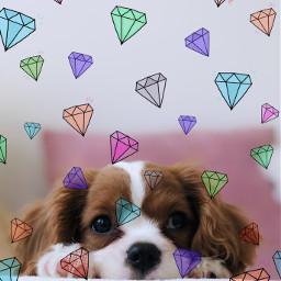 sweetdog diamonds colourful pink cute doggy srcshinycrystals shinycrystals freetoedit