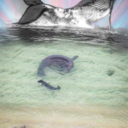 freetoedit newlife maui2021 hawaiianmonkseal and humpbackwhale beach blend pukalani