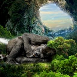 chimpanzee monkey freetoedit
