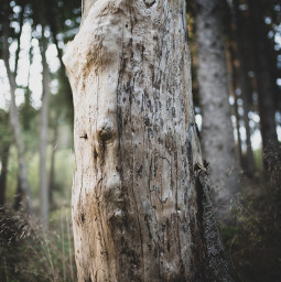 nature forest tree bokeh photography picoftheday freetoedit