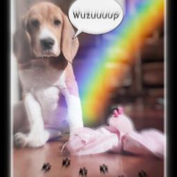 doglife freetoedit