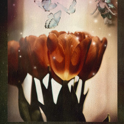 hartlove flower butterflies fairy stars freetoedit