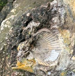 freetoedit rock stone shell imprint fossil bythebeach lake rocks shellphoto mothernature nature pcstonemade stonemade