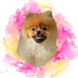 pet freetoedit