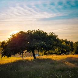 nature sunset sun sunshine tree grande picoftheday beautifulnature sky freetoedit