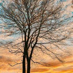 sunset sun picoftheday photography nature tree summer sky freetoedit