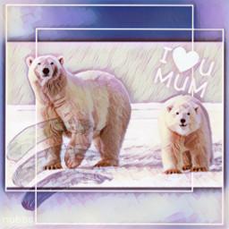 nobbscreative polarbear cub mamabear freetoedit unsplash rcmothersday2021 mothersday2021