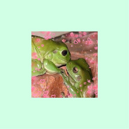 background wallpaper frog frogs cute kiss froggy green aesthetic hearts love pink kissingfrogs cutefrogs bestfriends forest alt freetoedit