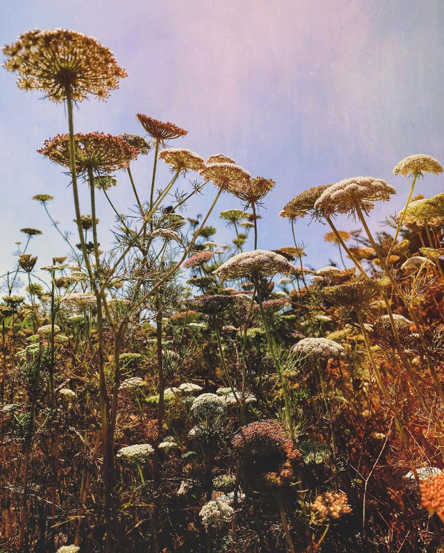 #nature #coutryside #grassland #flowers #naturesbeauty #grassflowers #simpleflowers #wildflowers #appreciateeverysinglemoment #enjoythelittlethingsinlife #appreciatenaturearoundyou #layingdown #lowangleshot #naturephotography                                                                        #freetoedit