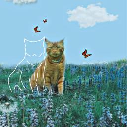drawtool cat mycat flowerfield orangecat fun madewithpicsart remixme freetoedit